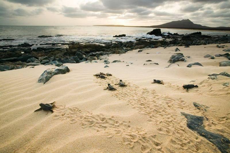 Cap vert ile de boa vista plage tortues