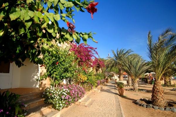 Cap vert ile de sal hotel morabeza jardin